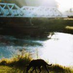 Walking trail Riverglade Caravan Park The old Bridge Tumut River